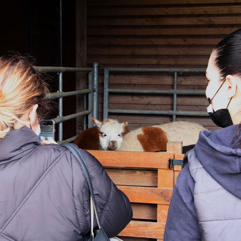 les élèves découvrent les animaux de la ferme